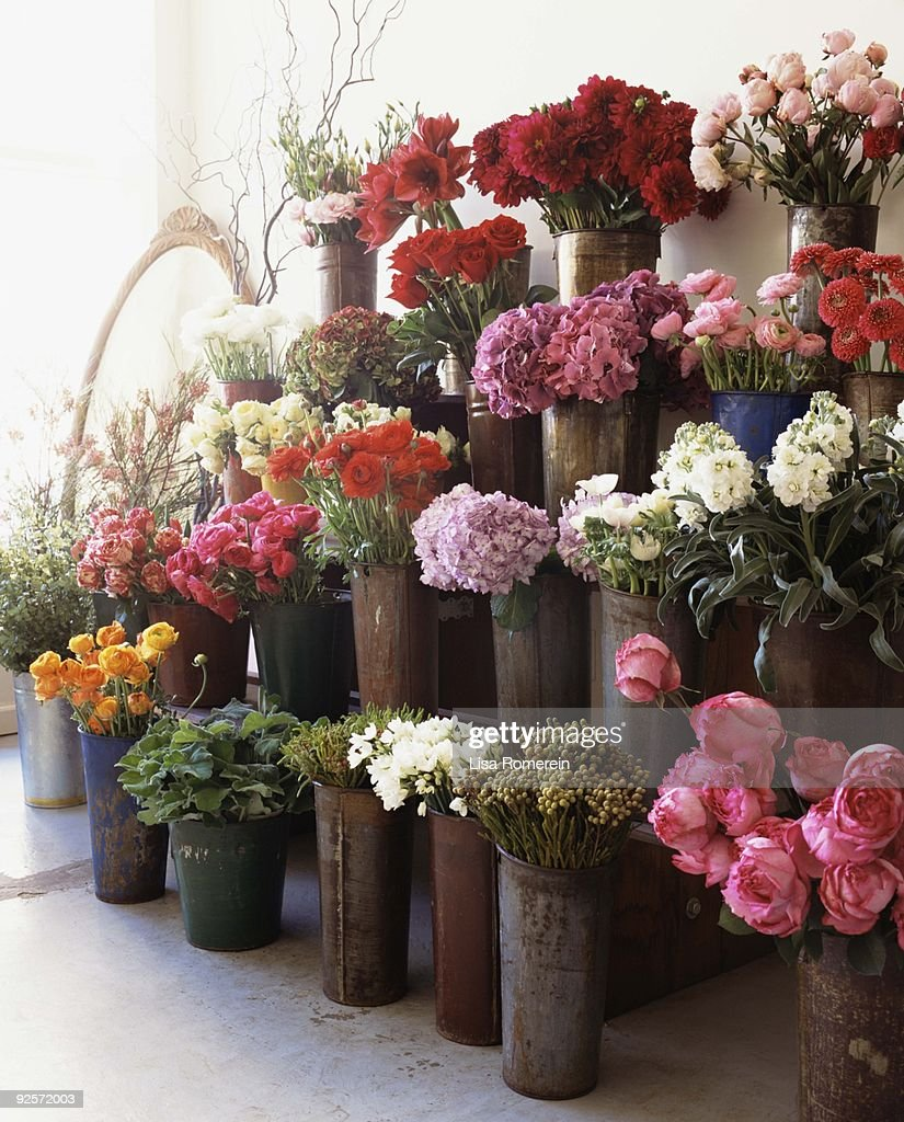 Flowers in flower shop : Stock Photo