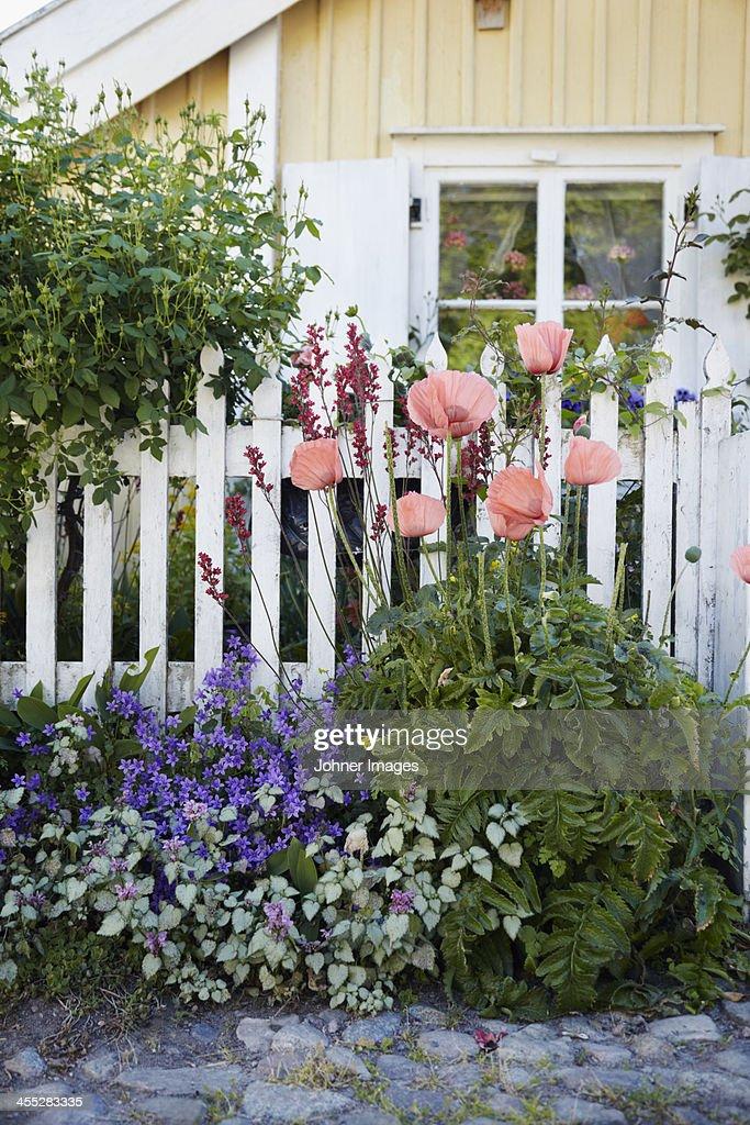 Flowers in front garden