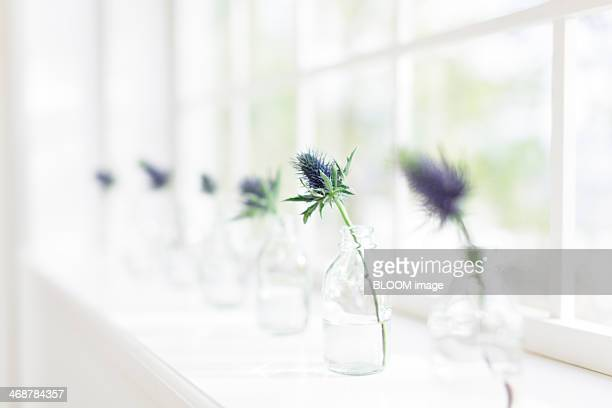 Flowers in glass vases on windowsill