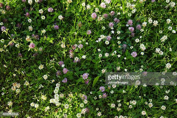 Flowers in grass