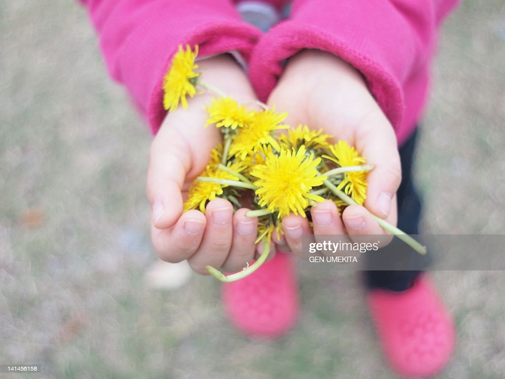 Flowers in hands : Stock Photo