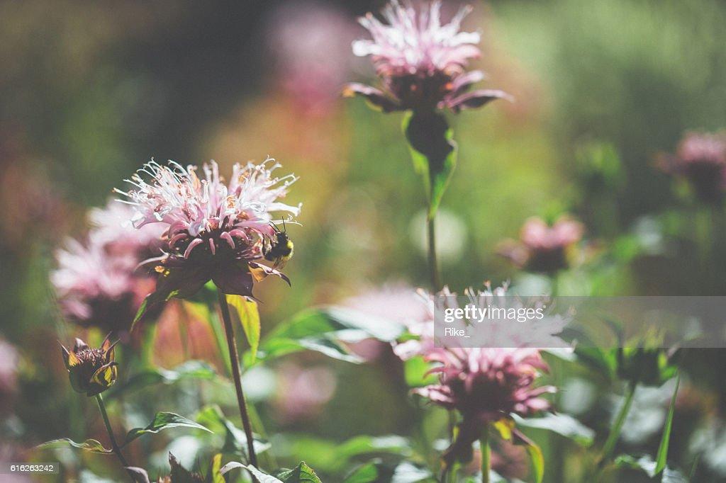 Flowers in light : Stock Photo