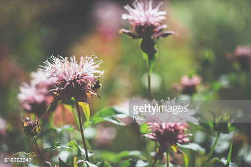 Flowers in light : Stock Photo