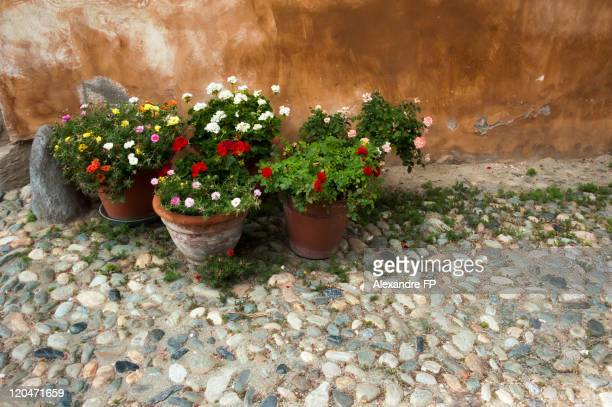 Flowers in terracotta pots in  cobblestone street