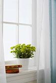 Flowers in vase on window sill