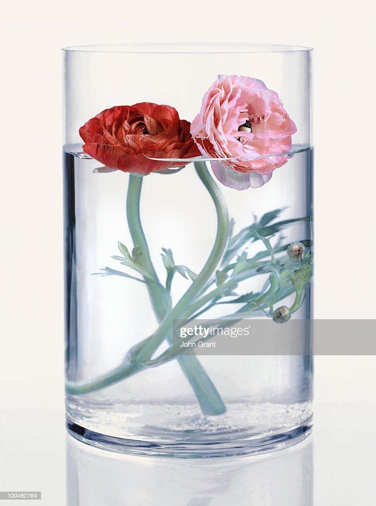 Flowers in vase : Stock Photo
