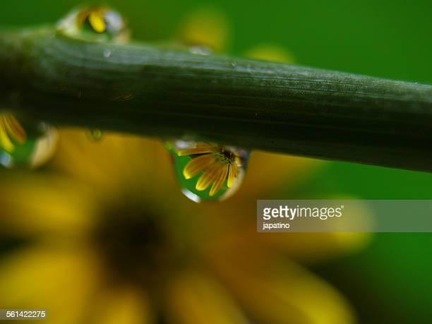 Flowers in water droplets
