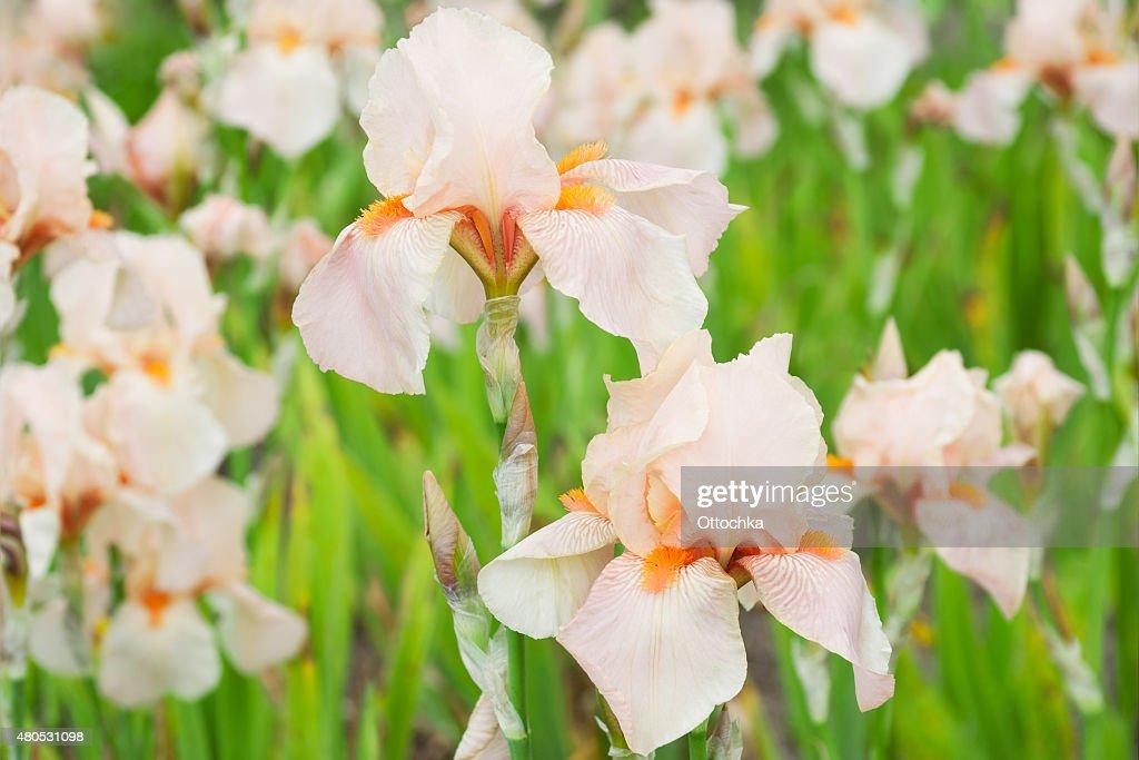 しっかり花 : ストックフォト