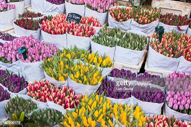 flowers market. amsterdam