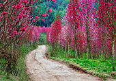 Rural landscape in spring, flowers blooming path