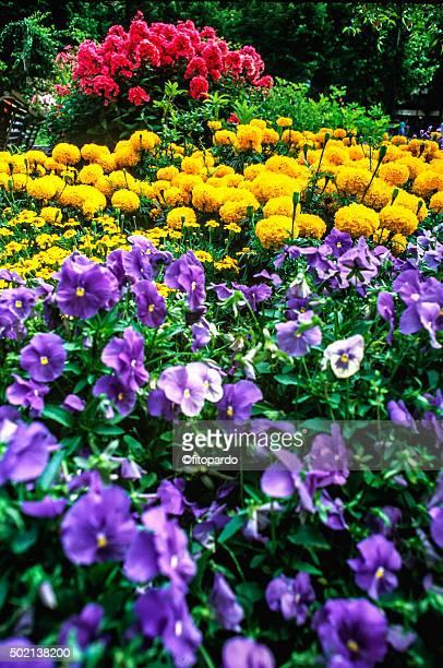 Flowers of summer in Stockholm