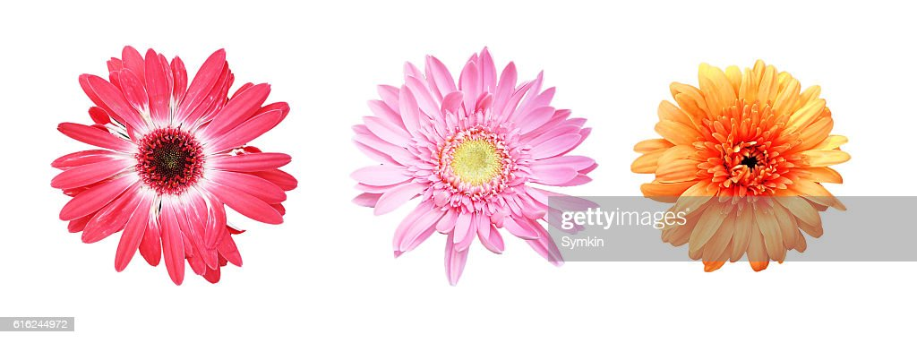 Flowers on a white background isolated : Stock Photo