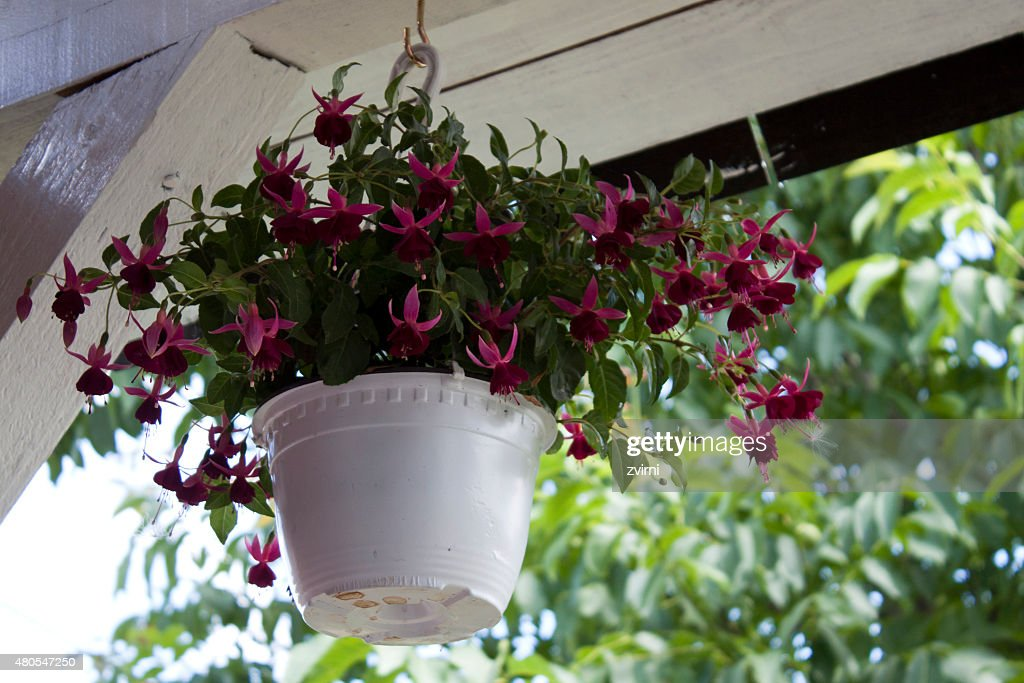 Flowers on balcony : Stock Photo
