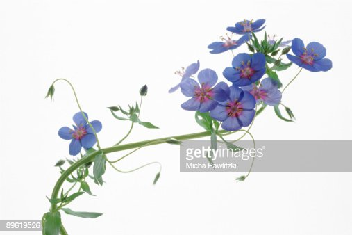 Flowers on branch : Stock Photo
