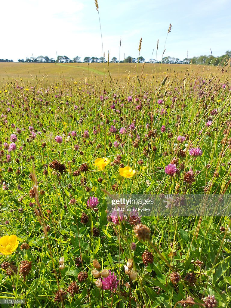 Flowers on landscape against clear sky