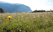 Beautiful flowers on mountain meadow in Dolomites, Alps, Italy