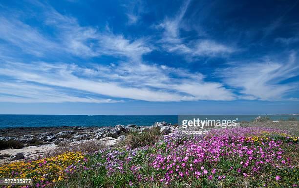 Flowers on rocky beach