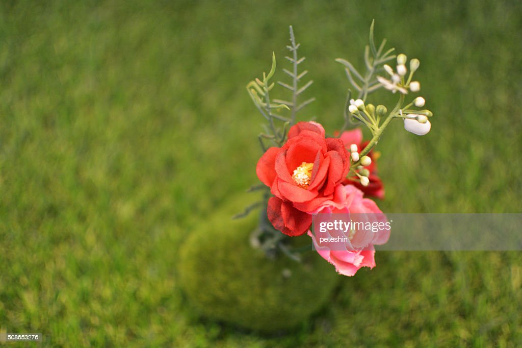 flowers on the grass : Stock Photo
