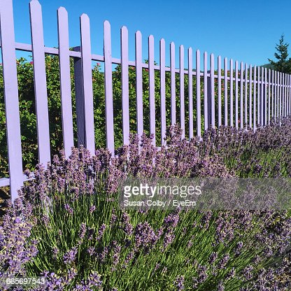 Flowers On Trees By Fence