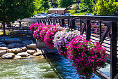 Flowers On Walking Bridge Over Truckee River In Reno, Nevada