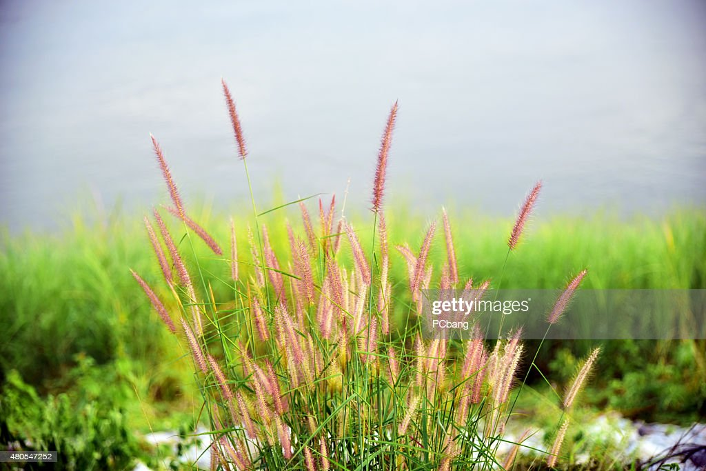 flowers : Stock Photo