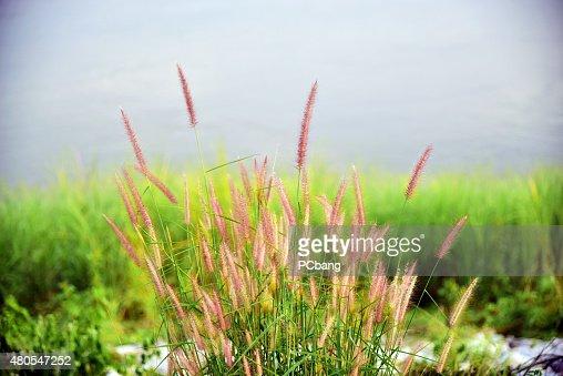 Flores : Foto de stock