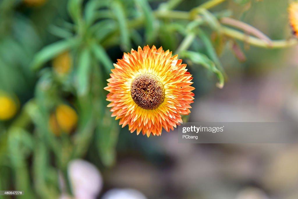 Blumen : Stock-Foto