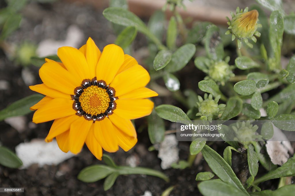 Flowers : Stock Photo