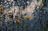 Flowers stand on a meadow flooded by rain as sun sets in Kaufbeuren southern Germany on July 27 2014 AFP PHOTO / DPA / KARLJOSEF HILDENBRAND /...