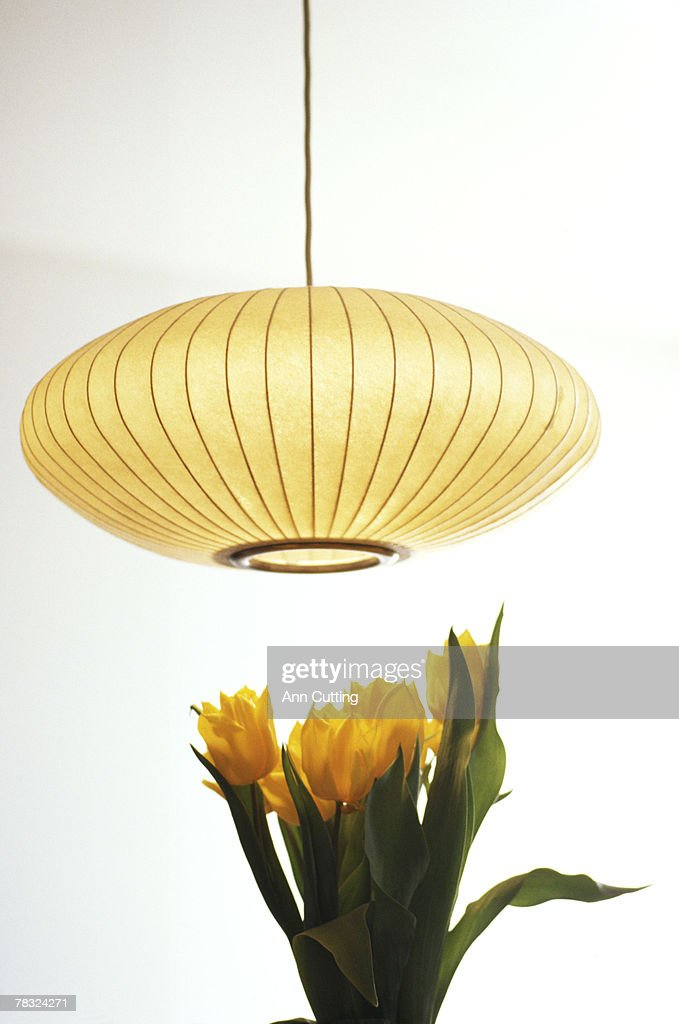 Flowers under hanging lamp : Stock Photo