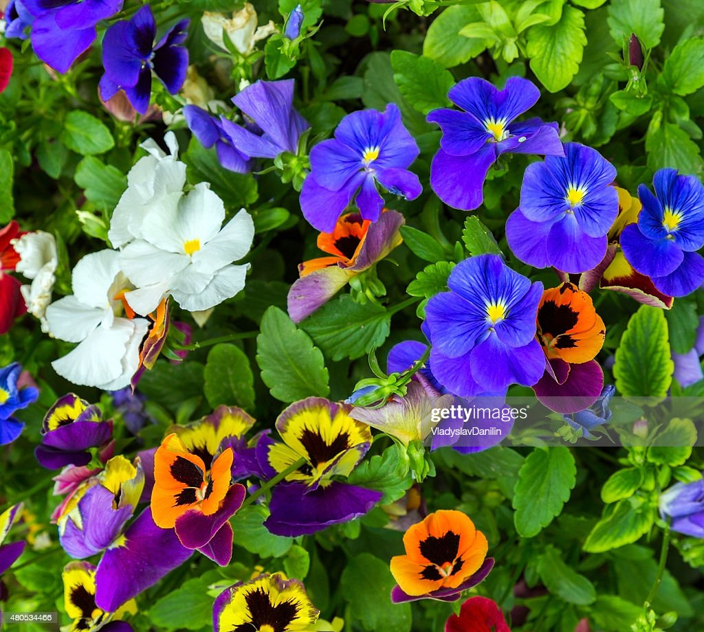 flowerses background : Bildbanksbilder
