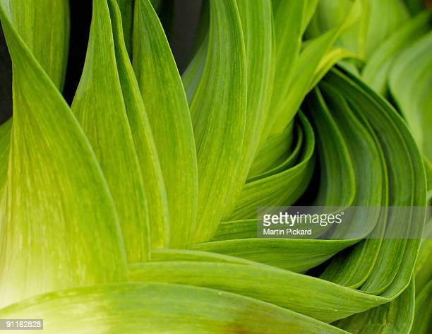 Flowing leak green leaves