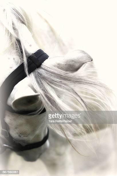 Flowing mane