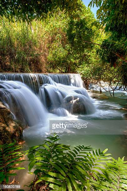 Flowing water under trees - Laos waterfall