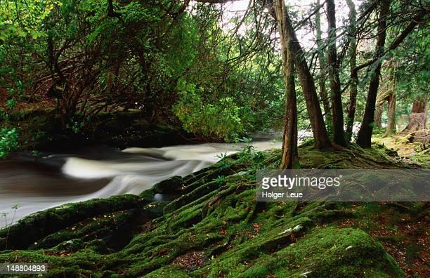 Flowing waters of River Owenshag, near Allihies.
