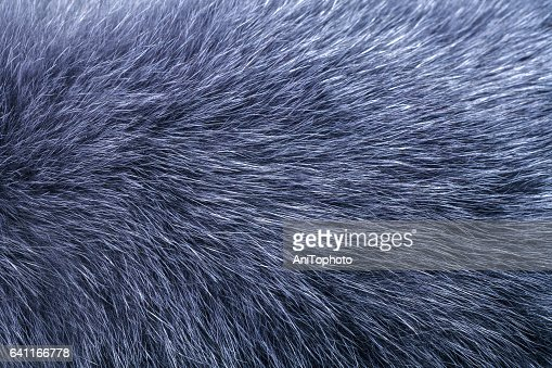 Fluffy gray fur texture : Stock Photo