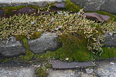 Fluffy moss on a stone wall