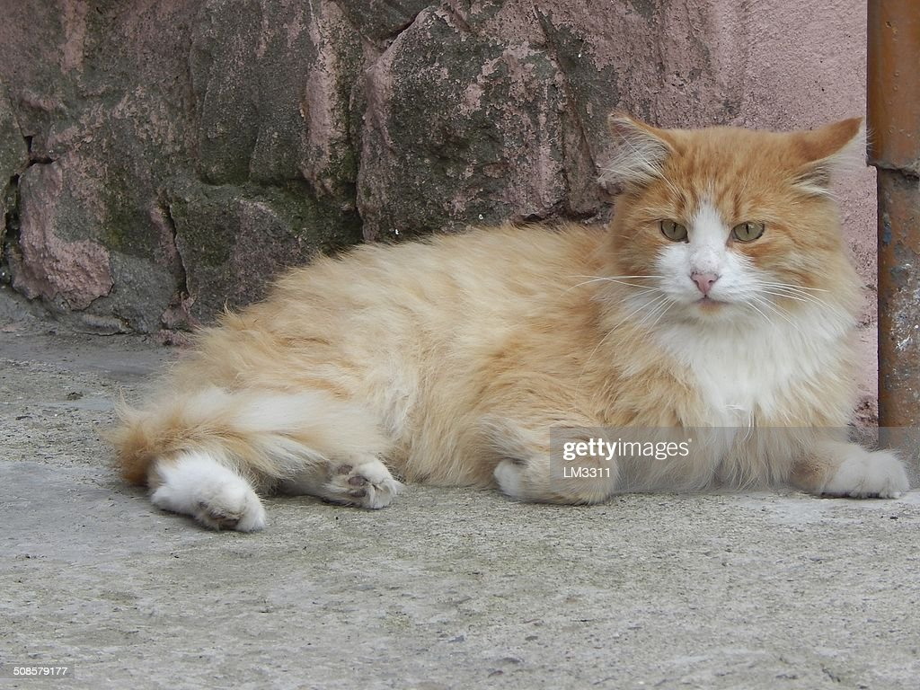 fluffy red cat on the porch : Stockfoto