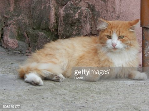 fluffy red cat on the porch : Stock Photo