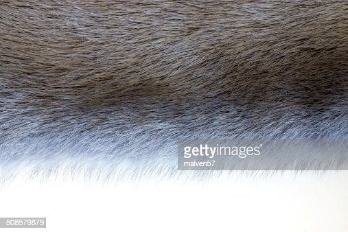 fluffy texture of fur wild animals : Stock Photo