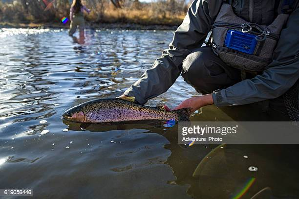 Fly Fisherman Holding Caught Rainbow Trout