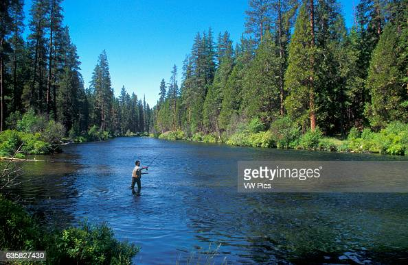 Fly fisherman on the Metolius River Deschutes National Forest Cascade Mountains central Oregon