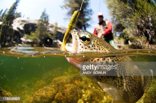 Fly Fishing : Stock Photo