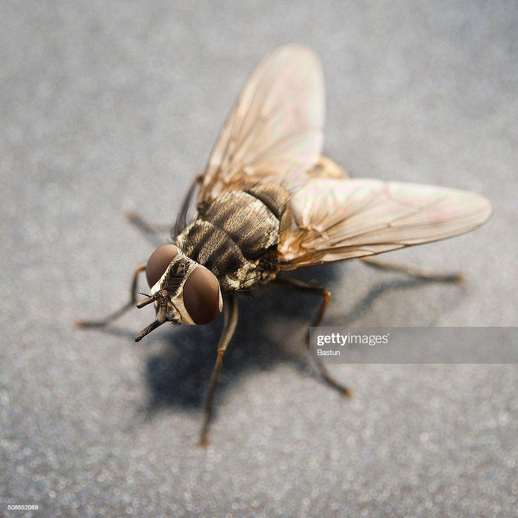 Fly : Stock Photo