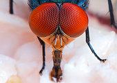 Flies were swarming Food