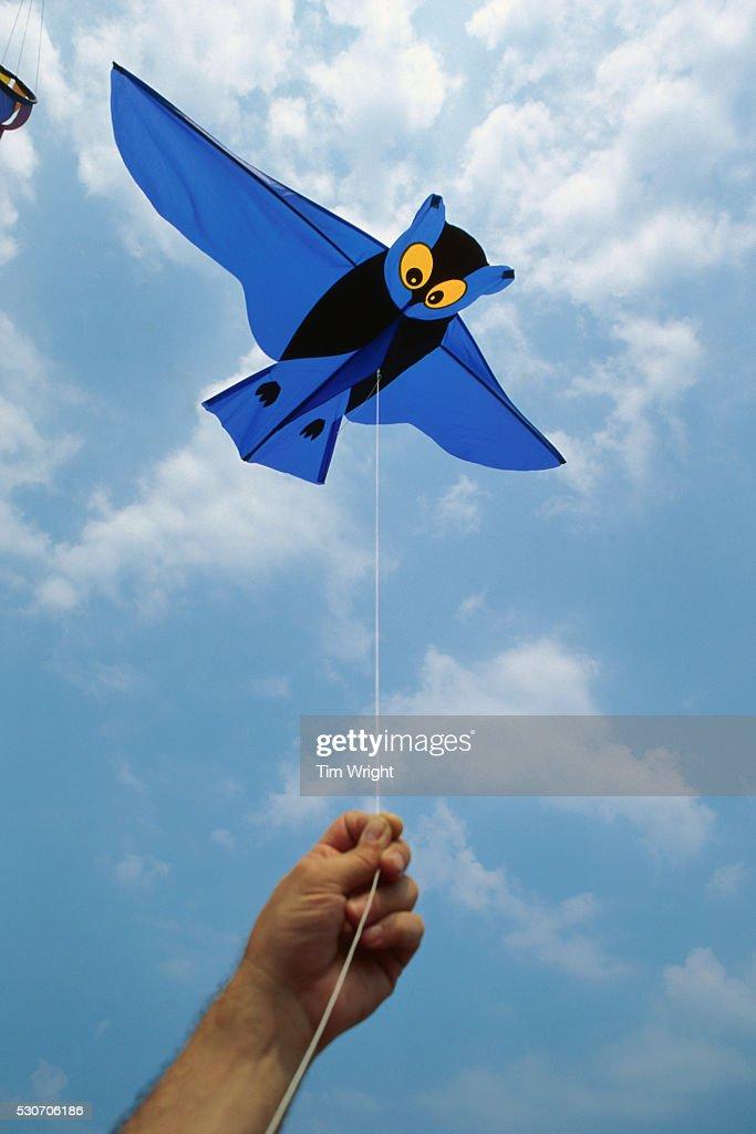 Flying a Blue Bat Kite