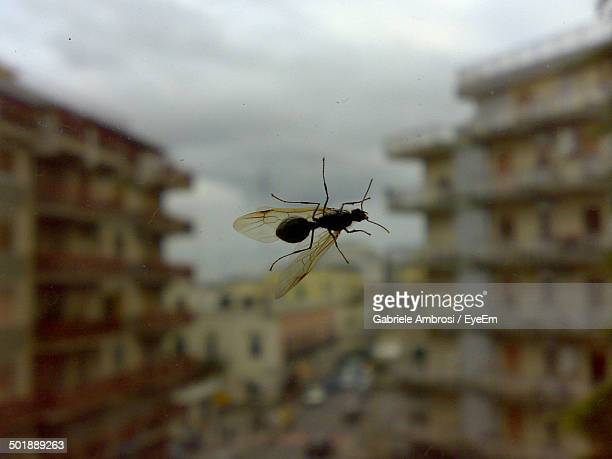 Flying ant on glass wall