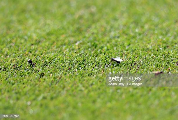 Flying ants on court Three on day three of the Wimbledon Championships at The All England Lawn Tennis and Croquet Club Wimbledon