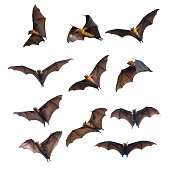 Flying bats isolated on white background , Halloween bats