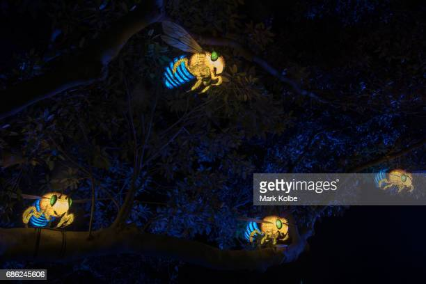 A flying bees installation one of the giant illuminated animal sculptures on display at Taronga Zoo is seen during a media call ahead of Vivid Sydney...